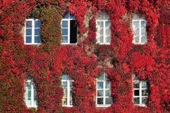 De voorgevel van de oude die bouw met rode druiven en witte vensters wordt overwoekerd Stock Afbeelding