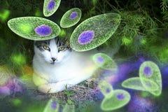 De voorlichtings conceptueel beeld van toxoplasmagondii Stock Fotografie