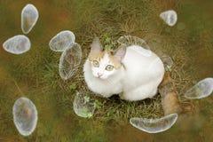 De voorlichtings conceptueel beeld van toxoplasmagondii Royalty-vrije Stock Fotografie