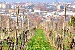 De voorraden van de wijngaard royalty-vrije stock afbeeldingen