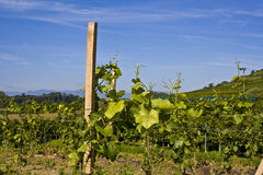De voorraden van de wijnstok royalty-vrije stock foto