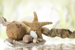 De voorwerpen van het strand Stock Foto's