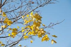 De vorige herfstbladeren stock foto