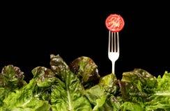 De Vorken & de Tomaat van de salade Stock Fotografie