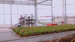 De vorkheftruck vervoerden bloemen Werkschema in een moderne serre stock videobeelden