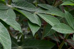 De vorm en de textuur van tropische groene bladeren royalty-vrije stock fotografie