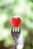 De vorm van de frambozen wirh haard op een vork stock afbeeldingen