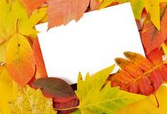 De vorm van de gelukwens in het de herfstgebladerte Stock Foto's