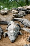De vorm van de krokodil stock fotografie