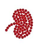 De vorm van de nier die uit tabletten wordt gemaakt Stock Afbeeldingen