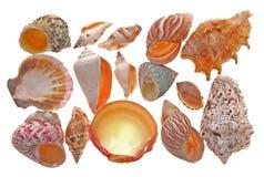 De vorm van de zeeschelp Stock Afbeelding