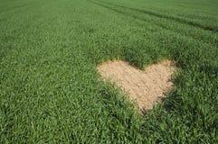 De vorm van het hart op groen gebied Royalty-vrije Stock Fotografie
