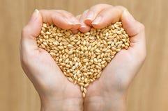De vorm van het hart van tarwe Stock Foto's