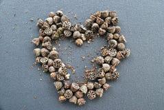 De vorm van het liefdehart van van de zaden dat van de theeboom wordt gemaakt Royalty-vrije Stock Fotografie