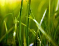 De Vormen van het gras Stock Foto