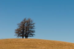 De vorming van de boom op een heuvel van grasvlakte, open weide stock foto