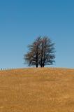 De vorming van de boom op een heuvel van grasvlakte, open weide Royalty-vrije Stock Afbeeldingen