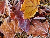De vorst behandelde Bladeren in de Herfst stock fotografie