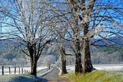 De vorst behandelt een weg en gebieden in Cades-Inham royalty-vrije stock afbeelding