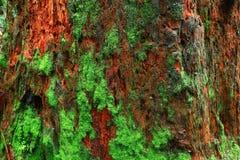 De vreedzame boom van de Noordwesten bos en Westelijke rode ceder stock afbeelding