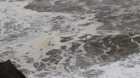 De vreedzame Oceaan stock videobeelden