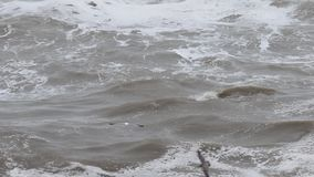 De vreedzame Oceaan stock video