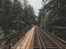 De vreedzame sporen van de Noordwestenspoorweg door het bos stock afbeelding