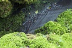 De vreedzame stroom vloeit water door weelderige mostextuur, backgrou Royalty-vrije Stock Foto