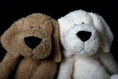 De vriend van het puppy Stock Foto