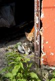 De Vrienden van het katje stock afbeeldingen