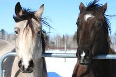 De Vrienden van het paard royalty-vrije stock foto