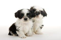 De Vrienden van het puppy voor het Leven stock afbeeldingen