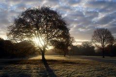 De vrijdaghout van de zonsopgang Stock Afbeeldingen