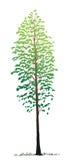 De vrije boom van de handtekening Royalty-vrije Stock Afbeelding