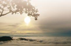 De vroege achtergrond van de ochtendzonsopgang met silhuateboom Royalty-vrije Stock Fotografie