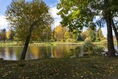 De vroege herfst bij de gevallen boom over de rivier royalty-vrije stock afbeeldingen
