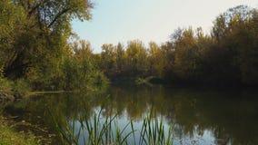 De vroege herfst op rivier stock video