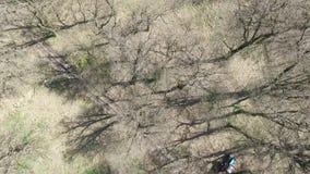 De vroege Lente Bomen zonder bladeren stock video