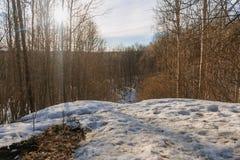 De vroege lente in het bos stock foto's