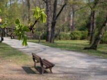 De vroege lente in het centrale het begin van parkbomen bloeien stock afbeeldingen