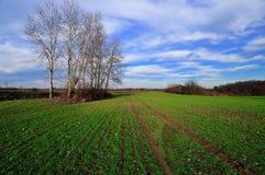 De vroege lente in het platteland Stock Foto's