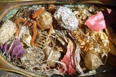 De vroege Lente Het stilleven van laatste year's droogt bladeren en vruchten royalty-vrije stock afbeeldingen
