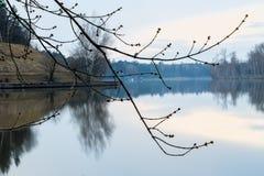 De vroege Lente Zonsondergang en schemering op de rivier naast de bostak van een boom met gezwelde knoppen Concept van Stock Afbeeldingen