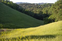 De vroege ochtend giet zijn licht op de groene, rollende heuvels van Martinez, Californië royalty-vrije stock afbeeldingen