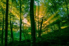 De vroege ochtend in het bos, de mist en de zonnestralen glanzen prachtig door de bomen, royalty-vrije stock foto