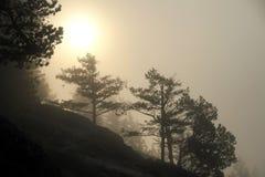De vroege onderbrekingen van de ochtendzon door dikke mist stock afbeelding