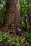 De vrouw bekijkt omhoog Grote Californische sequoia Royalty-vrije Stock Afbeeldingen