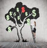 De vrouw beklimt bij dollarboom Stock Foto's