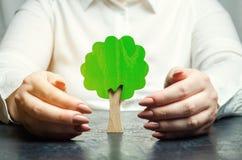 De vrouw beschermt een miniatuur groene boom Het bewaren van het milieu en het beschermen van bossen tegen ontbossing en uitsterv royalty-vrije stock foto's