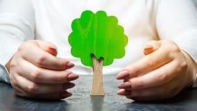 De vrouw beschermt een miniatuur groene boom Het bewaren van het milieu en het beschermen van bossen tegen ontbossing en uitsterv royalty-vrije stock afbeeldingen